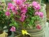 2017-05-09 bloemen 010