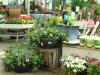 2017-05-09 bloemen 056